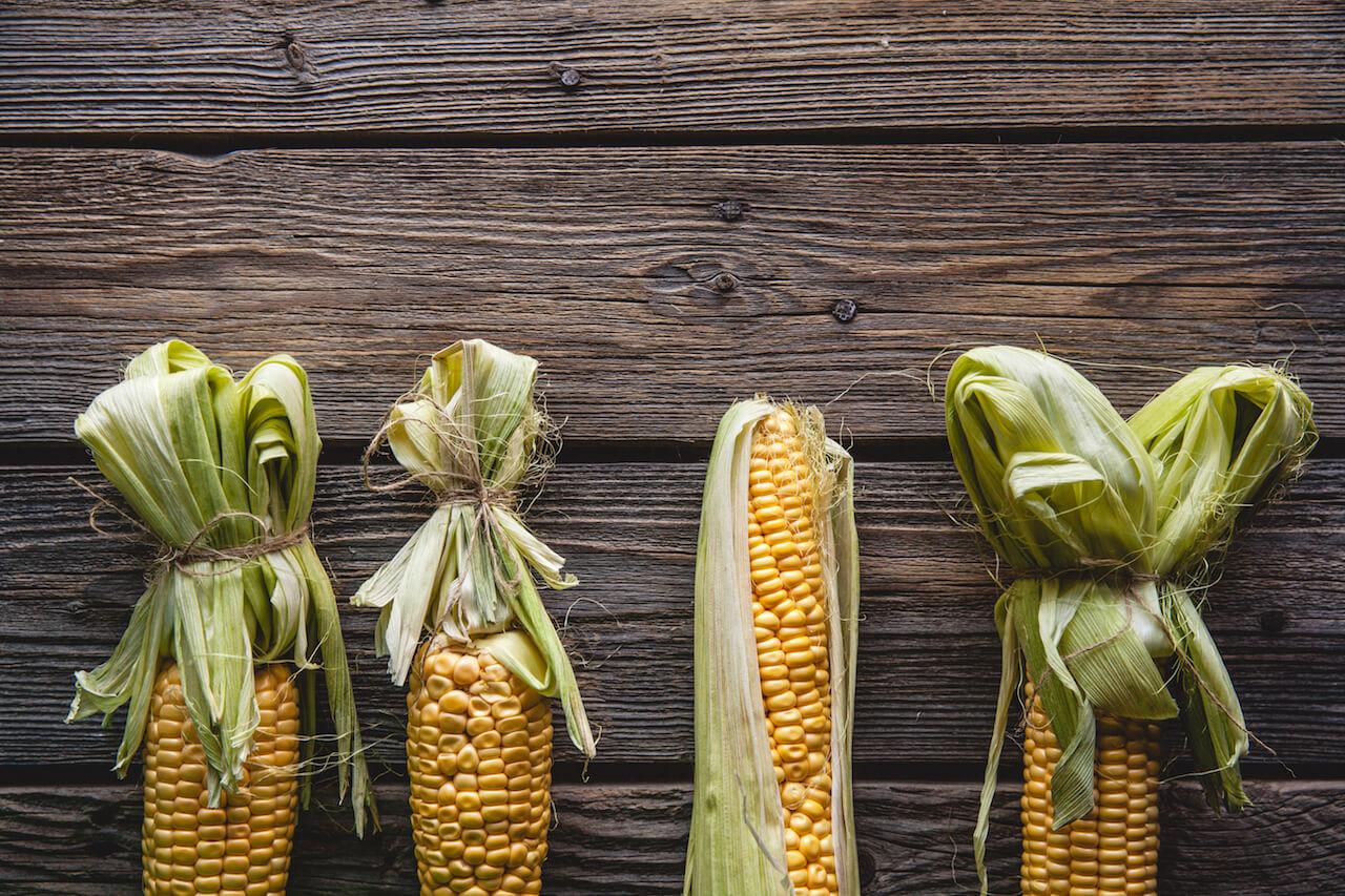 옥수수 요리