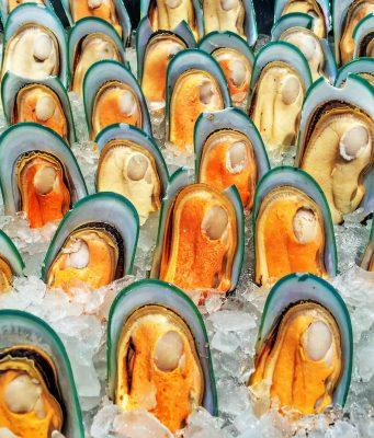 초록입홍합